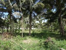 LAND FOR SALE ONLY 5 KILOMETERS FROM HUA HIN